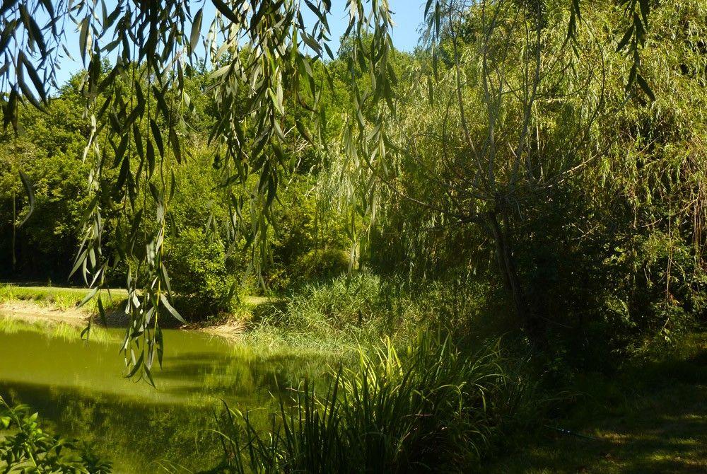 Ombragé pour pêcher en toute tranquillité proche du village du Bugue en Dordogne
