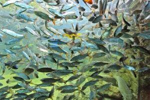 aquarium-perigord-noir