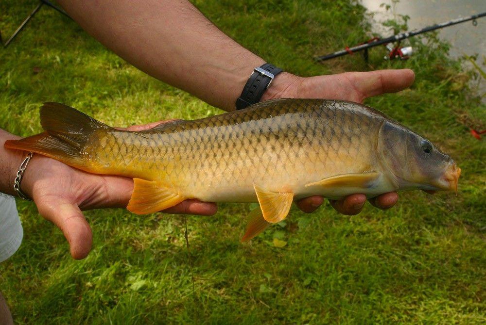 Fishing for carp in Périgord Noir